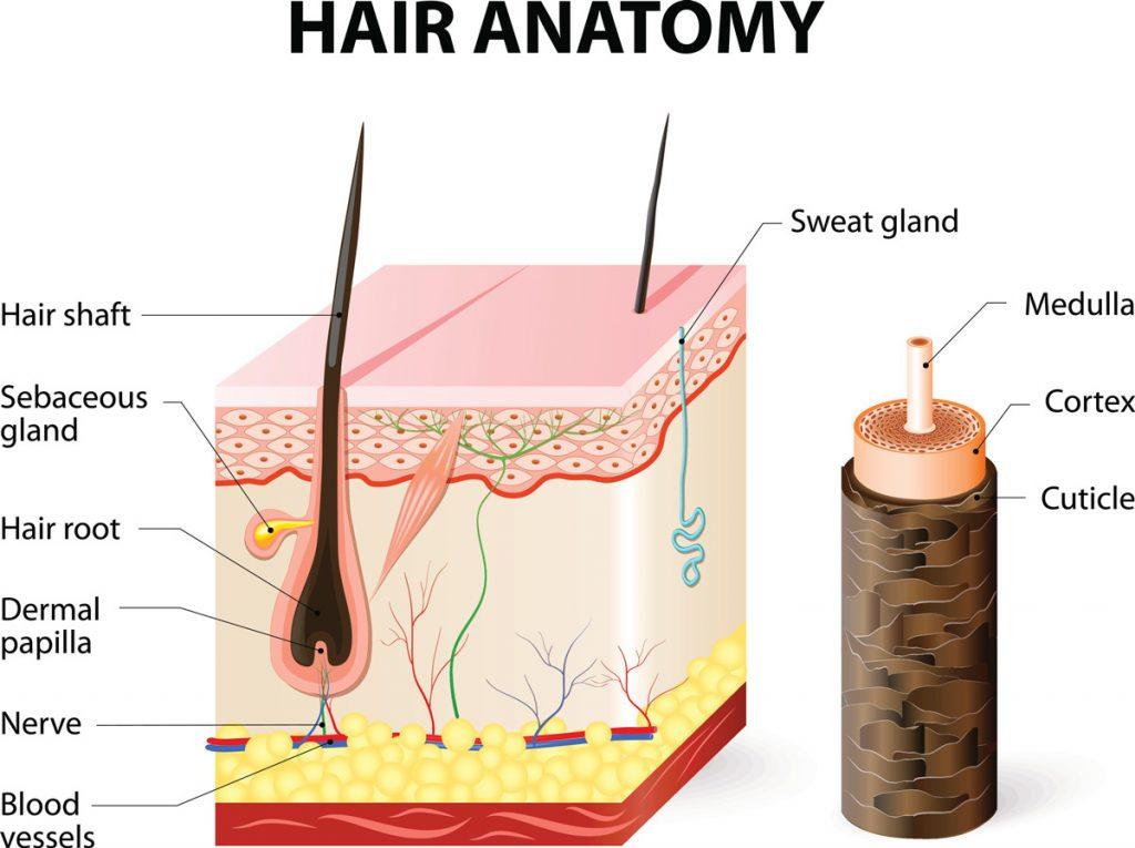 Splendor X in Idaho Falls - Laser Hair Removal at Rosemark